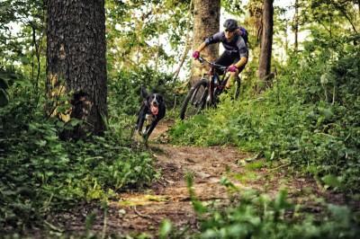 Trail Dog - Trek